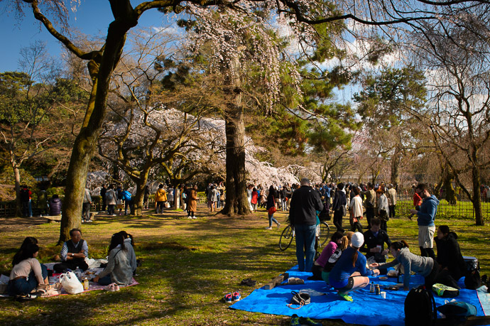 Cherry-Blossom Picnic -- Kyoto Imperial Palace Park (京都御所公園) -- Kyoto, Japan -- Copyright 2017 Jeffrey Friedl, http://regex.info/blog/ -- This photo is licensed to the public under the Creative Commons Attribution-NonCommercial 4.0 International License http://creativecommons.org/licenses/by-nc/4.0/ (non-commercial use is freely allowed if proper attribution is given, including a link back to this page on http://regex.info/ when used online)