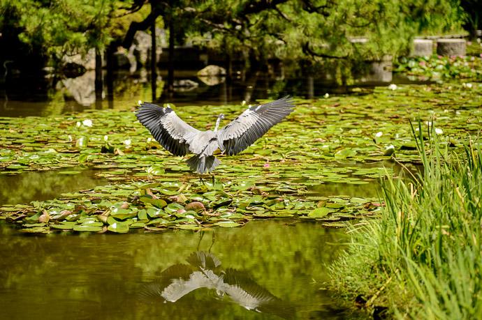 Heian Shrine (平安神宮) -- Kyoto, Japan -- Copyright 2017 Jeffrey Friedl, http://regex.info/blog/