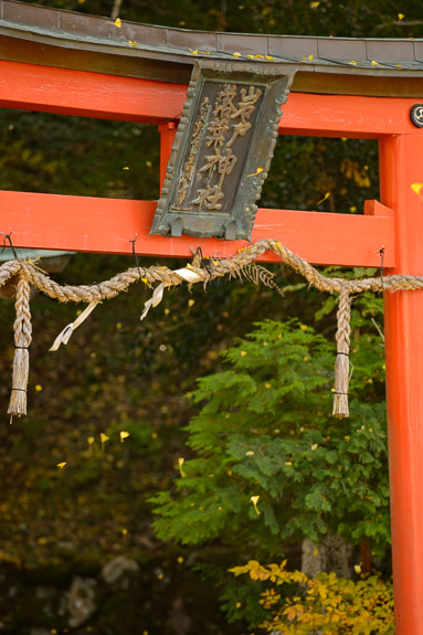 Constant Flurry of Falling Leaves -- Iwato Ochiba Shrine (岩戸落葉神社) -- Kyoto, Japan -- Copyright 2017 Jeffrey Friedl, http://regex.info/blog/ -- This photo is licensed to the public under the Creative Commons Attribution-NonCommercial 4.0 International License http://creativecommons.org/licenses/by-nc/4.0/ (non-commercial use is freely allowed if proper attribution is given, including a link back to this page on http://regex.info/ when used online)