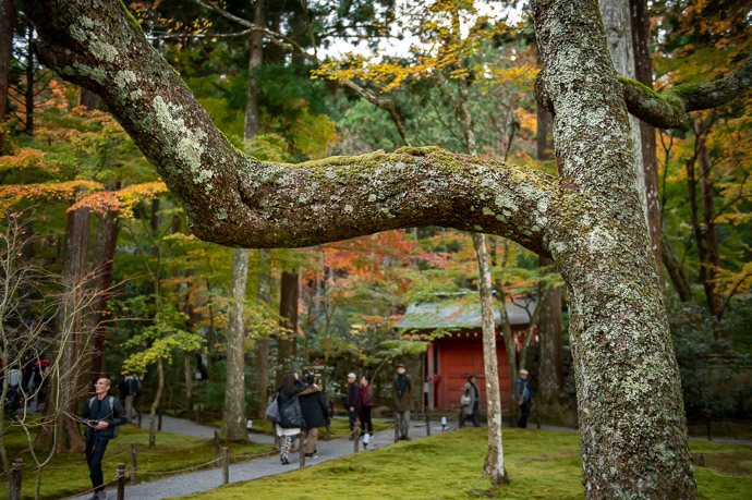 Nice Detail -- Sanzen-in Temple (三千院) -- Kyoto, Japan -- Copyright 2018 Jeffrey Friedl, http://regex.info/blog/ -- This photo is licensed to the public under the Creative Commons Attribution-NonCommercial 4.0 International License http://creativecommons.org/licenses/by-nc/4.0/ (non-commercial use is freely allowed if proper attribution is given, including a link back to this page on http://regex.info/ when used online)