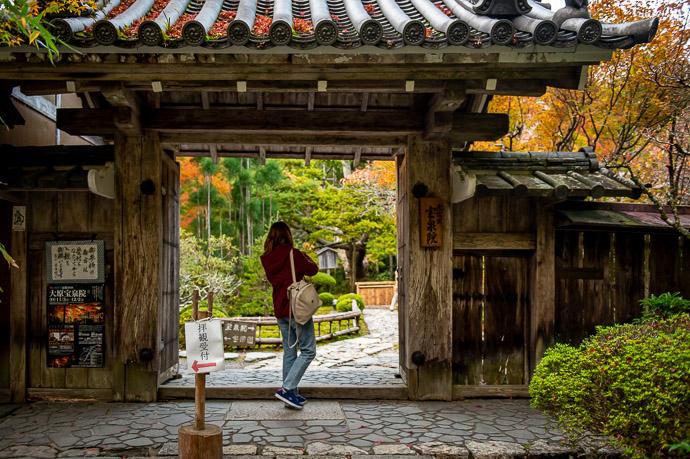 Just Peeking Hosen-in Temple (宝泉院) -- Hosen-in Temple (宝泉院) -- Kyoto, Japan -- Copyright 2018 Jeffrey Friedl, http://regex.info/blog/