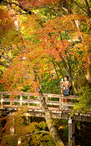 A lady in kimono among autumn colors, at the Shugakuin Imperial Villa (修学院離宮) in Kyoto, Japan