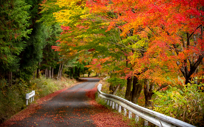 a rural road in Japan in autumn
