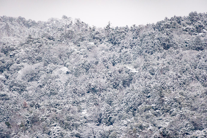 Frosty -- Kyoto, Japan -- Copyright 2019 Jeffrey Friedl, http://regex.info/blog/