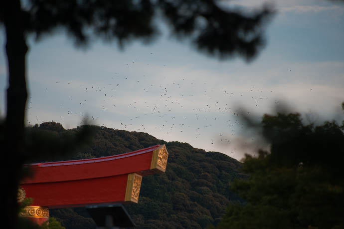 Swarm of Birds gathering half a mile away, up at the top of the mountain, near from where I took this shot -- Kyoto, Japan -- Copyright 2008 Jeffrey Eric Francis Friedl, http://regex.info/blog/