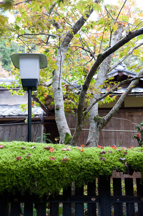 Fence, Lamp, and Tree  --  Kibune  --  Kyoto, Japan  --  Copyright 2008 Jeffrey Friedl, http://regex.info/blog/