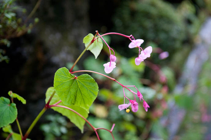 Flower Growing from a Crack in a Wall  --  Kibune  --  Kyoto, Japan  --  Copyright 2008 Jeffrey Friedl, http://regex.info/blog/