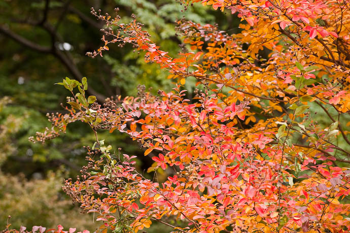 Pretty Colors ho hum... yawn...  --  Kyoto Gosho  --  Kyoto, Japan  --  Copyright 2008 Jeffrey Friedl, http://regex.info/blog/
