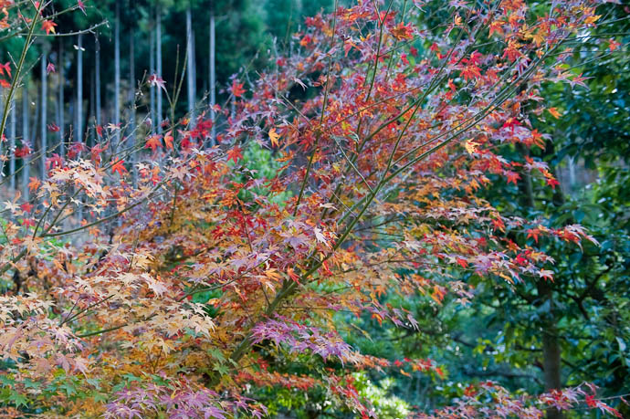just a snapshot, showing a Wild Variety of Color -- Kyoto, Japan -- Copyright 2008 Jeffrey Friedl, http://regex.info/blog/
