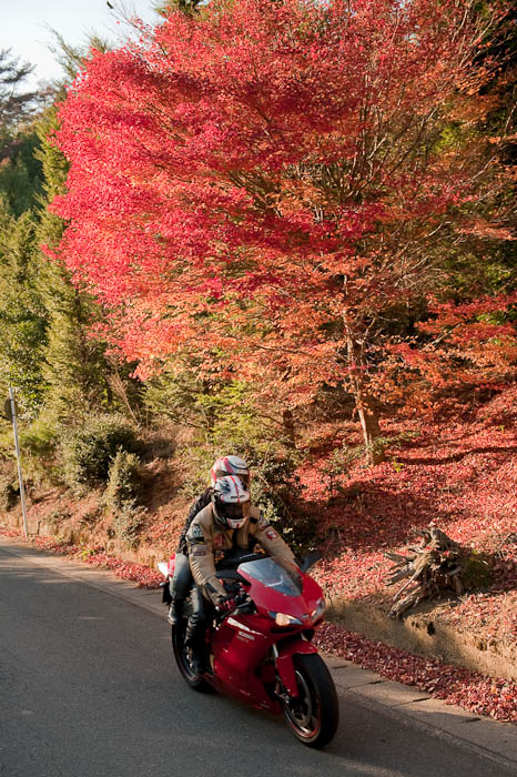 More Traffic The driver had a Ducati bike, Ducati jacket, and a Ducati helmet. I think he likes Ducati. -- Kyoto, Japan -- Copyright 2008 Jeffrey Friedl, http://regex.info/blog/