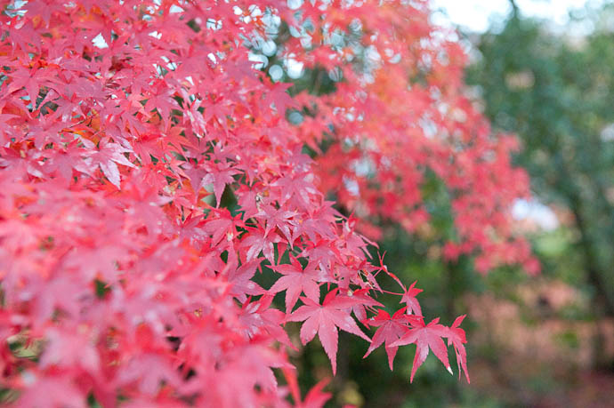 — map & image data — nearby photos Trees were Pretty in the darkening dusk -- Shogunzuka -- Kyoto, Japan -- Copyright 2008 Jeffrey Friedl, http://regex.info/blog/