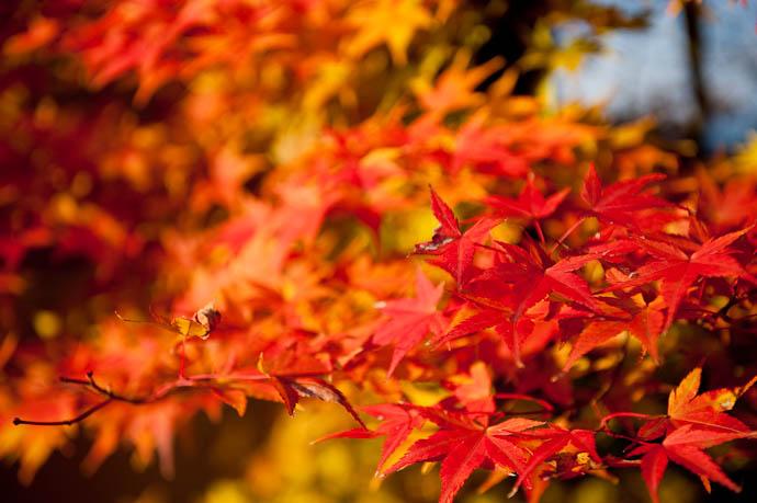 A Little Color lifts the mood -- Otsu, Shiga, Japan -- Copyright 2008 Jeffrey Friedl, http://regex.info/blog/