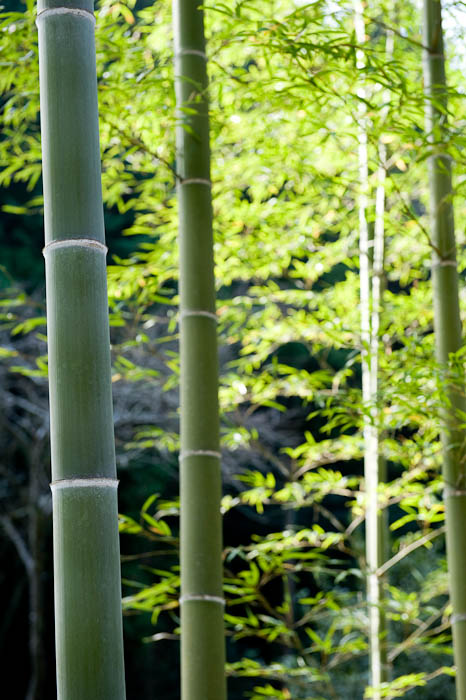 Bamboo By the Side of the Road -- Kyoto, Japan -- Copyright 2008 Jeffrey Friedl, http://regex.info/blog/