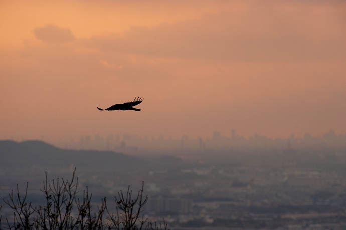 Crow and the Osaka skyline 30 miles away -- Shogunzuka Overlook -- Kyoto, Japan -- Copyright 2009 Jeffrey Friedl