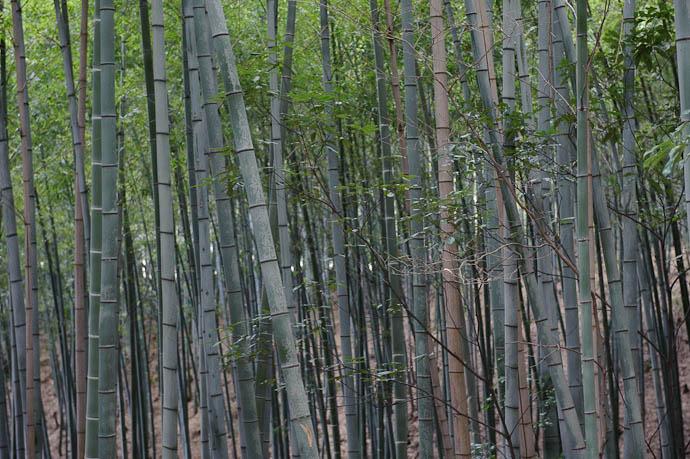 Bichromatic -- Kyoto, Japan -- Copyright 2009 Jeffrey Friedl, http://regex.info/blog/