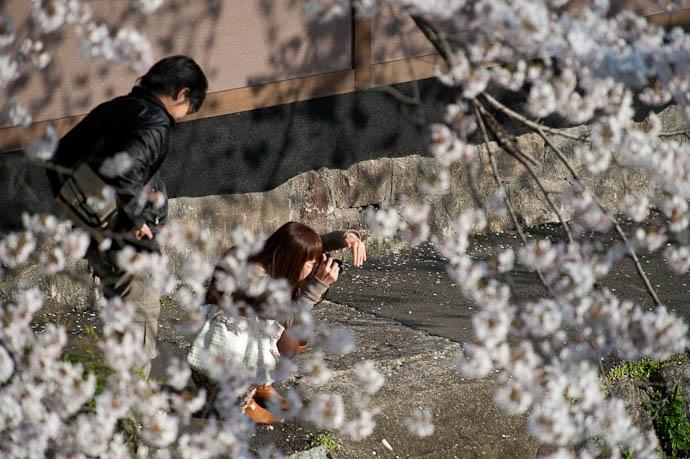 Shielding Against the Setting Sun -- Kyoto, Japan -- Copyright 2009 Jeffrey Friedl, http://regex.info/blog/
