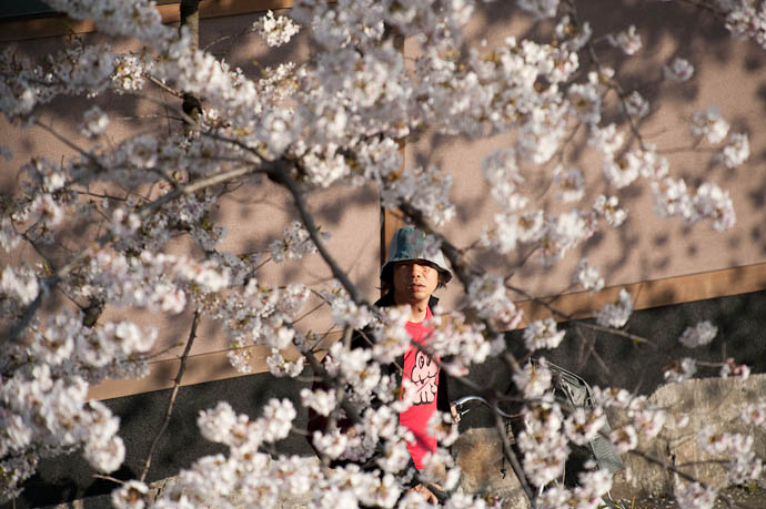 Crossed Signals he's looking at the blossoms; I'm looking at him I don't think he even noticed me -- Kyoto, Japan -- Copyright 2009 Jeffrey Friedl, http://regex.info/blog/
