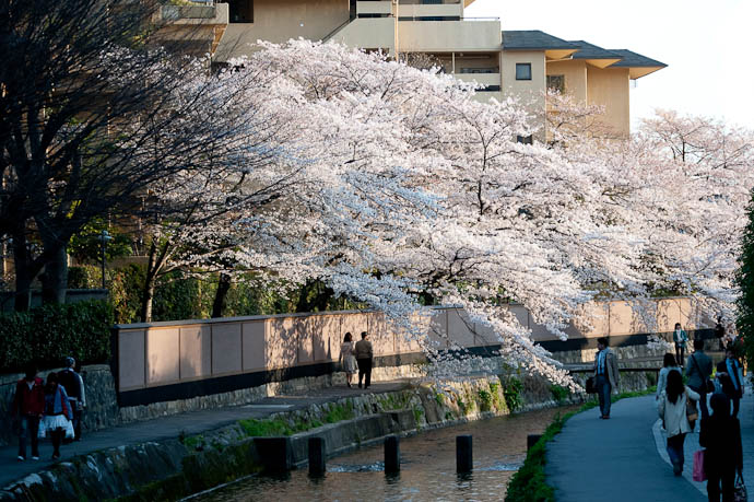 River and Blossoms Near Sunset -- Kyoto, Japan -- Copyright 2009 Jeffrey Friedl, http://regex.info/blog/