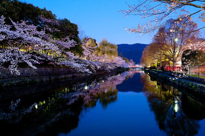 desktop background image of the Kyoto Biwako Canal lined with cherry blossoms, at dusk -- Prior to the Lightup -- Okazaki Cherry-Blossom Lightup -- Kyoto, Japan -- Copyright 2009 Jeffrey Friedl, http://regex.info/blog/