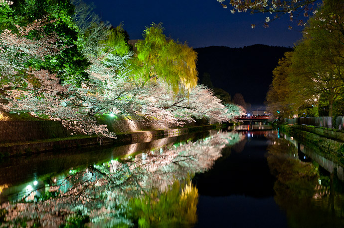 desktop background image of the Kyoto Biwako Canal lined with cherry blossoms, at dusk -- Lightup it would have been nice if they turned the lights on earlier, when the dusk was still vibrant -- Okazaki Cherry-Blossom Lightup -- Kyoto, Japan -- Copyright 2009 Jeffrey Friedl, http://regex.info/blog/