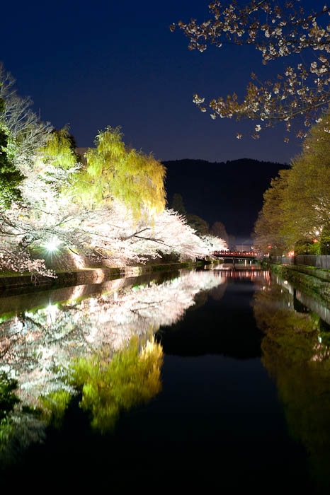 , f/13, ISO 1600 — map & image data — nearby photos 7:04pm -- Okazaki Cherry-Blossom Lightup -- Kyoto, Japan -- Copyright 2009 Jeffrey Friedl, http://regex.info/blog/