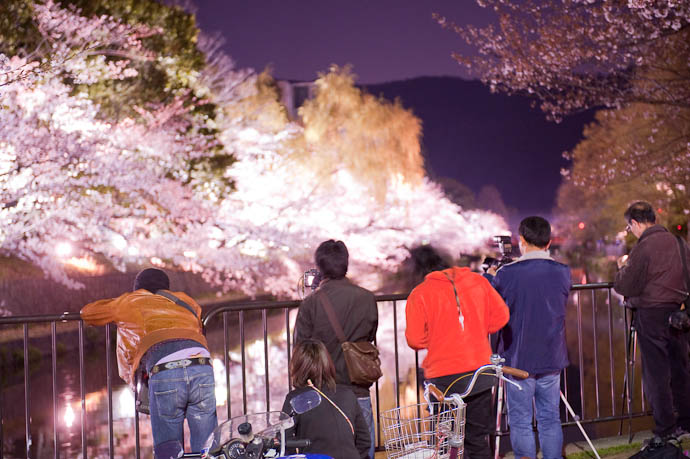 """Wonky Color and Overexposure let's file this one under """"artistic license"""" — 7:21pm -- Okazaki Cherry-Blossom Lightup -- Kyoto, Japan -- Copyright 2009 Jeffrey Friedl, http://regex.info/blog/"""
