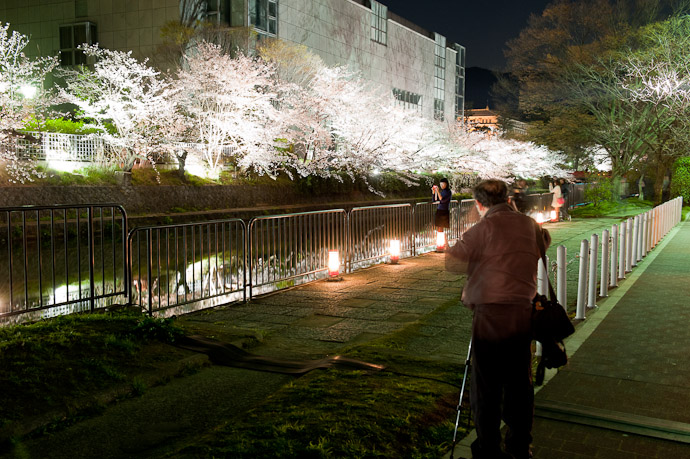 Okazaki Cherry-Blossom Lightup -- Kyoto, Japan -- Copyright 2009 Jeffrey Friedl, http://regex.info/blog/