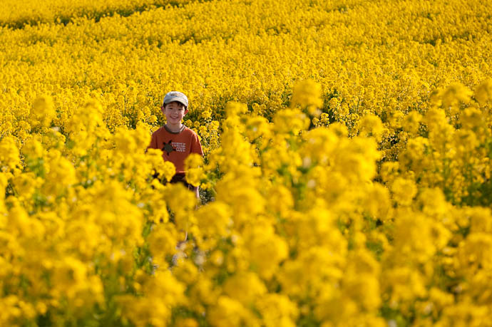 "Anthony Among the Flowers at the Awaji Hana Sajiki , the ""Awaji Flower Review"" Park Awaji Island, Japan -- Awaji, Hyogo, Japan -- Copyright 2009 Jeffrey Friedl, http://regex.info/blog/"