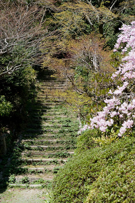 Mountain Stairs and Sakura -- Konzou Temple -- Kyoto, Japan -- Copyright 2009 Jeffrey Friedl, http://regex.info/blog/