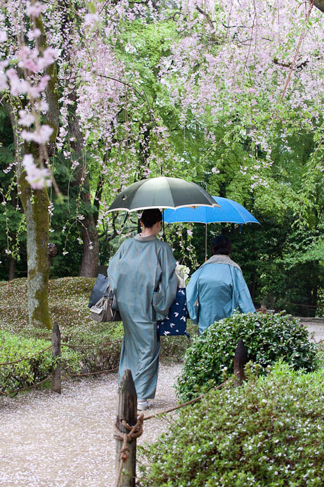 Wet Hanami -- Heian Shrine -- Kyoto, Japan -- Copyright 2009 Jeffrey Friedl, http://regex.info/blog/