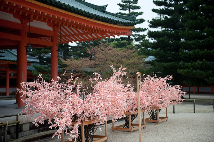 Pink Trees -- Heian Shrine -- Kyoto, Japan -- Copyright 2009 Jeffrey Friedl, http://regex.info/blog/