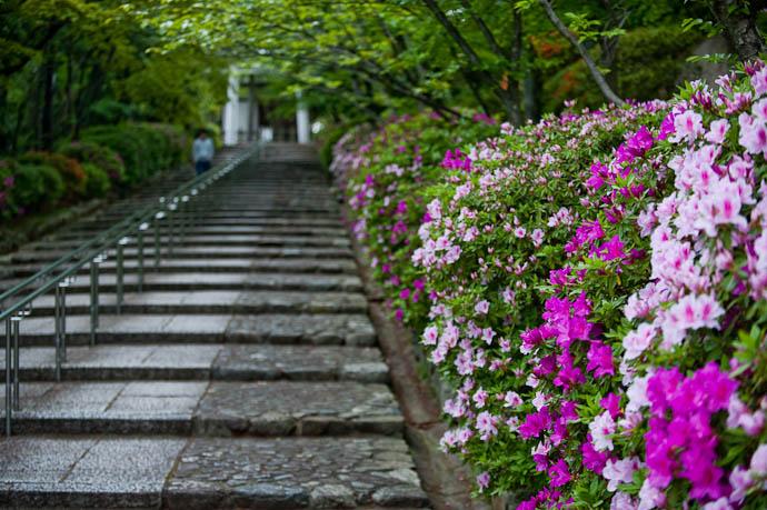 Azaleas Leading To the Munetada Shrine on Mt. Yoshida, Kyoto, Japan -- Copyright 2009 Jeffrey Friedl, http://regex.info/blog/