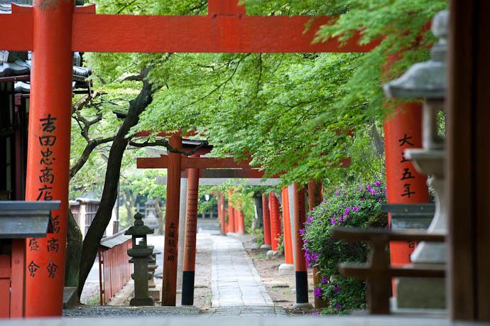 Gates at Takenaka Inari Shrine Part of the Yoshida Shrine complex, Kyoto Japan -- Copyright 2009 Jeffrey Friedl, http://regex.info/blog/