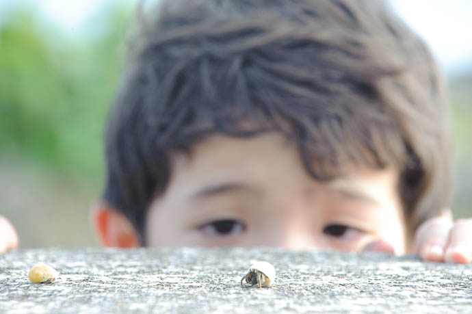Inspecting a Tiny Hermit Crab -- Ishigaki, Okinawa, Japan -- Copyright 2009 Jeffrey Friedl, http://regex.info/blog/