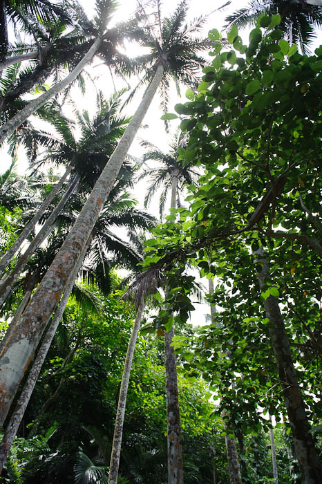 Tall Palms take my word for it -- Ishigaki, Okinawa, Japan -- Copyright 2009 Jeffrey Friedl, http://regex.info/blog/