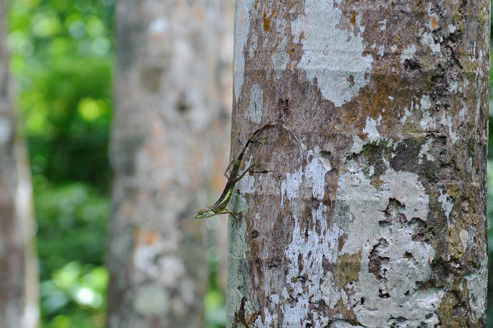 Zippy Little Friend -- Ishigaki, Okinawa, Japan -- Copyright 2009 Jeffrey Friedl, http://regex.info/blog/