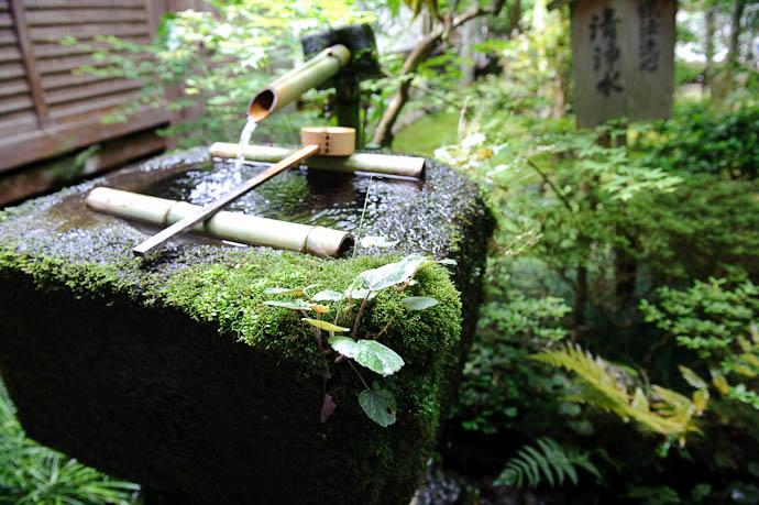 Growing Tsukubai Basin Sanzen-in Temple in Ohara, a mountain suburb of Kyoto, Japan -- Sanzen-in Temple -- Copyright 2009 Jeffrey Friedl, http://regex.info/blog/