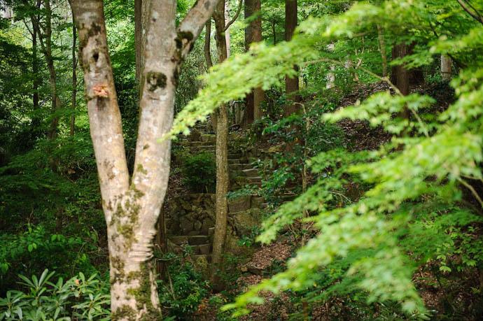 Forest Stairway -- Sanzen-in Temple -- Kyoto, Japan -- Copyright 2009 Jeffrey Friedl, http://regex.info/blog/