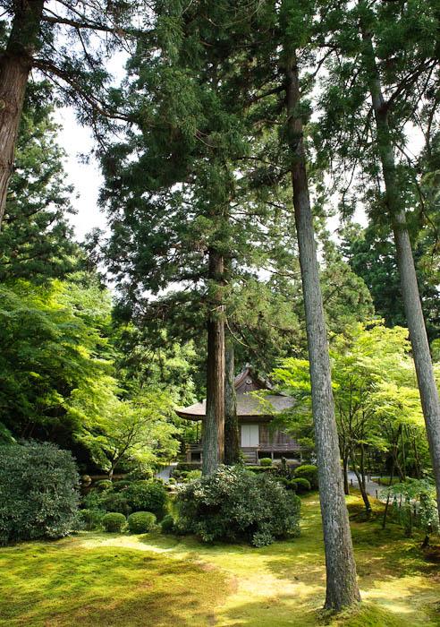 Towering -- Sanzen-in Temple -- Kyoto, Japan -- Copyright 2009 Jeffrey Friedl, http://regex.info/blog/