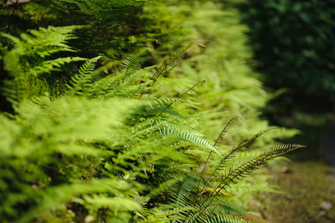 Wall of Fern -- Sanzen-in Temple -- Kyoto, Japan -- Copyright 2009 Jeffrey Friedl, http://regex.info/blog/