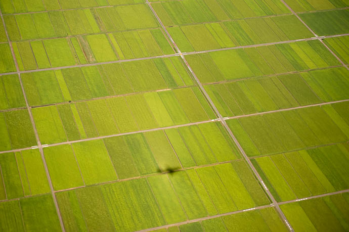 On Tokyo Final Approach Shadow on Rice Fields -- Flight from Osaka Itami to Tokyo Narita -- Inashiki, Ibaraki Prefecture, Japan -- Copyright 2009 Jeffrey Friedl