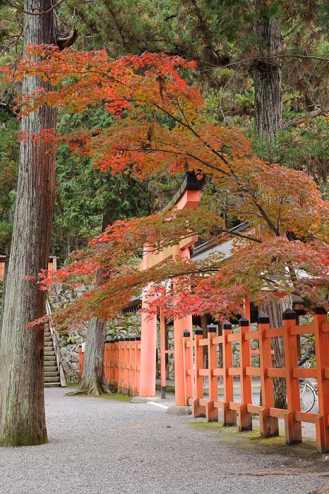 Bicycle Parking -- Yoshida Shrine -- Kyoto, Japan -- Copyright 2009 Jeffrey Friedl, http://regex.info/blog/