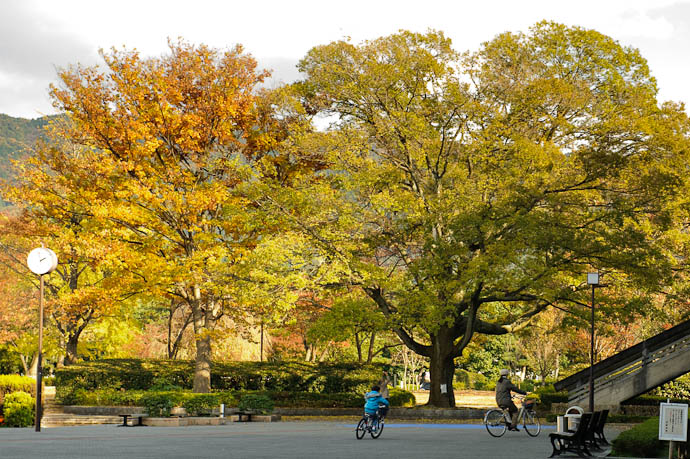 Family Bike Ride on a brisk, blustery autumn day in Kyoto -- Kyoto, Japan -- Copyright 2009 Jeffrey Friedl, http://regex.info/blog/