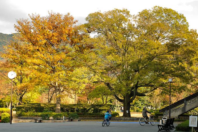 Family Bike Ride on a brisk, blustery autumn day in Kyoto -- Kyoto, Japan -- Copyright 2009 Jeffrey Friedl, http://regex.info/blog/