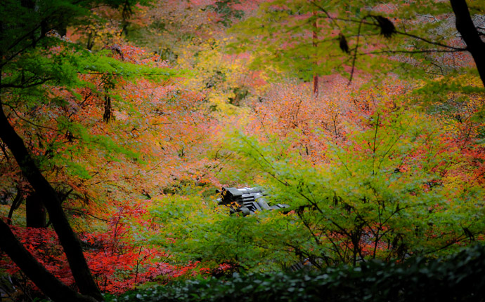desktop background image of a fall-colors scene at the Eikando Temple (永観堂), Kyoto Japan  --  Eikando Temple  --  Copyright 2009 Jeffrey Friedl, http://regex.info/blog/