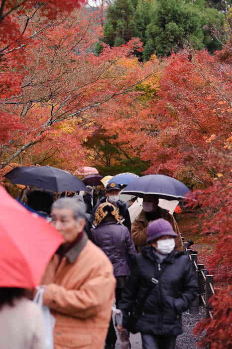 Full -- Eikando Temple -- Kyoto, Japan -- Copyright 2009 Jeffrey Friedl, http://regex.info/blog/