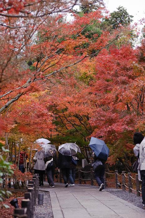 Empty ( relatively speaking ) -- Eikando Temple -- Kyoto, Japan -- Copyright 2009 Jeffrey Friedl, http://regex.info/blog/