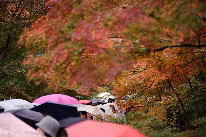 Stream -- Eikando Temple -- Kyoto, Japan -- Copyright 2009 Jeffrey Friedl, http://regex.info/blog/