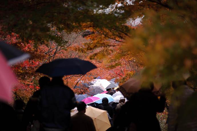 Going with the Flow -- Eikando Temple -- Kyoto, Japan -- Copyright 2009 Jeffrey Friedl, http://regex.info/blog/