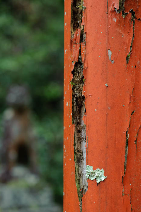 Leafy Lichen -- Himukai Shrine -- Kyoto, Japan -- Copyright 2009 Jeffrey Friedl, http://regex.info/blog/